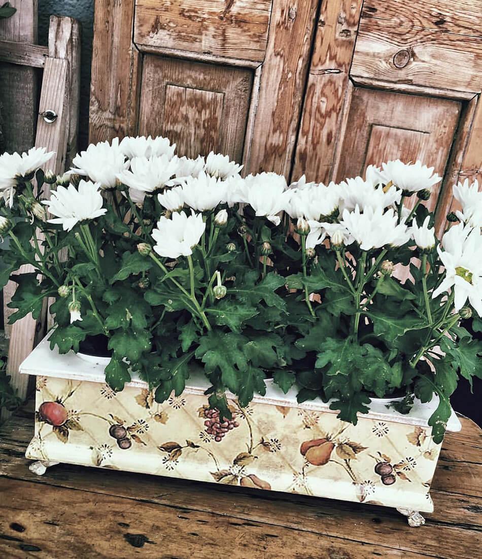 jardinera de margaritas blancas