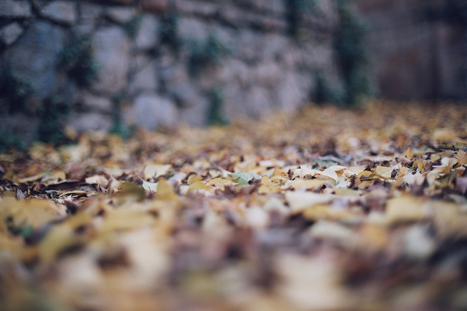 sleeves/hojas. fall/otoño